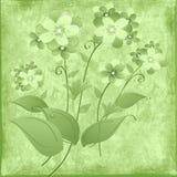 зеленый цвет glade Стоковые Изображения