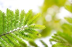 Зеленый цвет Resh новый выходит накалять в солнечный свет & зеленый цвет выходит на Стоковые Изображения RF