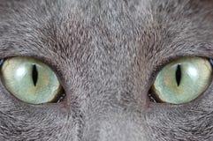 зеленый цвет s глаза кота Стоковые Изображения RF