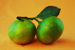 Зеленый цитрус Стоковое Изображение