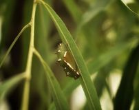 Зеленый червь на лист Стоковая Фотография