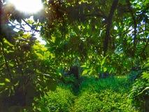 Зеленый Стоковые Изображения RF