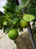 Зеленый стоковая фотография rf