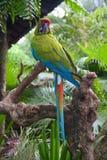 Зеленый ara стоковые фото