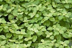 Зеленый Bush стоковое изображение rf