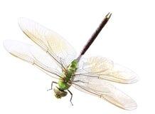 Зеленый dragonfly Стоковые Фотографии RF