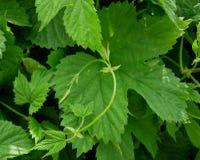 зеленый leaver Стоковая Фотография RF