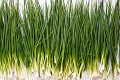 зеленый shallot стоковые изображения rf
