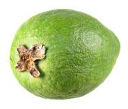 Зеленый unpeeled плодоовощ feijoa изолированный на белизне Стоковая Фотография