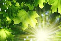 зелень пущи свежая стоковые изображения rf