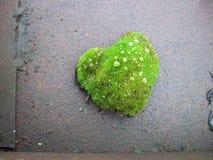 Зелёная любовь stock photography