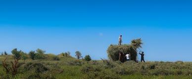 Земледелие во время лета стоковое фото rf