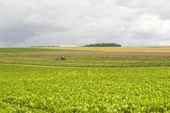 Земледелие в Франции Стоковые Изображения RF