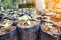 Земледелие и осеменять концепцию шага семени завода растущую Стоковая Фотография
