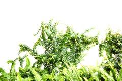 Земледелие и осеменять концепцию шага семени завода растущую Стоковые Фотографии RF