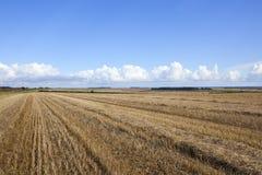 Земледелие пустошей Йоркшира Стоковые Изображения RF