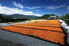земледелие Стоковая Фотография RF