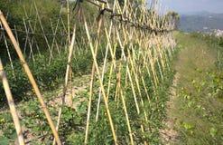 земледелие Стоковое фото RF