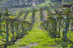 земледелие Стоковые Изображения