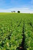 земледелие Стоковые Изображения RF