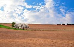 землепашество поля Стоковые Фото