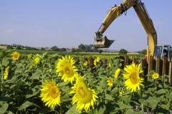Землечерпалка и солнцецветы Стоковая Фотография RF