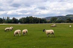 Земли Дербишира Peakdistrict дома Chatsworth стоковое изображение