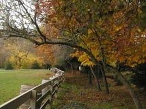 земли листва падения Стоковые Фото