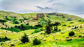 Земли травы долины Nicola внутри, Британская Колумбия, Канада Стоковое Изображение RF