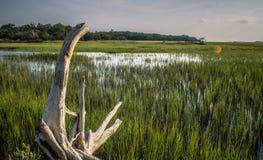 Земли marchland плантации Edisto Южной Каролины влажные на заходе солнца Стоковое Изображение RF