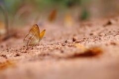 земля бабочки Стоковые Изображения