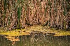 Земля болота Стоковые Фото