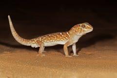 земля гиганта gecko стоковое фото