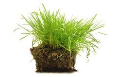 земля зеленого цвета травы Стоковые Изображения