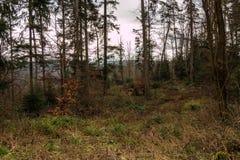 Земля леса и высоких деревьев Стоковое Изображение RF