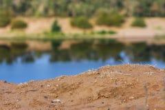Земля почвы Brown Стоковые Изображения