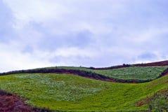 земля рисуночная Стоковые Фотографии RF