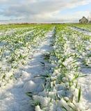земля снежная Стоковые Фото