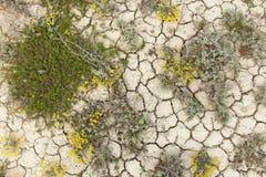 земля треснутая предпосылкой сухая треснутая картина грязи Почва в отказе Стоковое Изображение RF