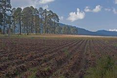 земля урожая Стоковая Фотография