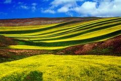 земля цвета Стоковые Фото