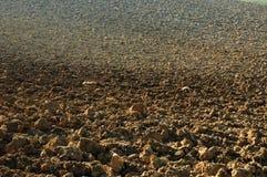 земля цветов Стоковая Фотография RF