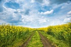 Земная дорога в желтом поле рапса стоковые фотографии rf