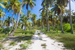Земная дорога через пальмы доминиканско стоковое фото