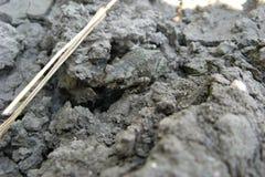 Земная лягушка Стоковая Фотография RF