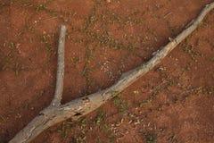 земная древесина Стоковые Изображения
