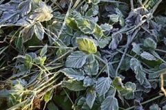 Земной заморозок Стоковые Фото