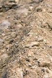 земной макрос Стоковая Фотография RF