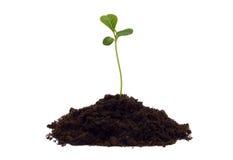 земной росток Стоковые Изображения RF
