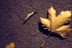 земные листья Стоковое Изображение RF